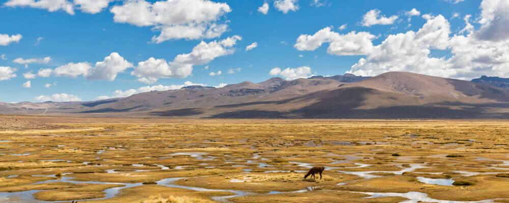 ¿Qué hacer en Arequipa? - La Reserva Nacional de Salinas y Agua Blanca