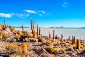 Isla del Pesacado - Lago Colorado - Salar de Uyuni