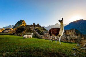 Llamas en Machu Picchu