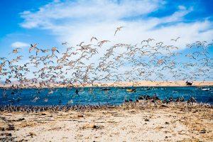 Fauna silvestre de las Islas Ballestas